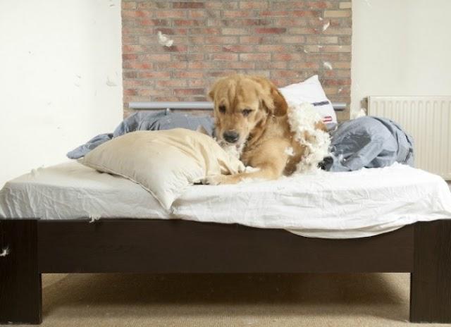 Το κρεβάτι του σκύλου μας αποτελεί εστία μικροβίων. Κάθε πότε πρέπει να το πλένουμε