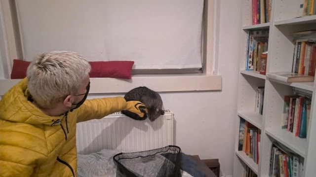 Saját macskája támadt egy nőre Budapesten, kórházba kellett szállítani