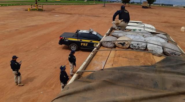 PRF em Mato Grosso concentra maior apreensão de madeiras do País