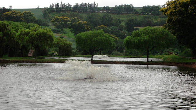 Cria peixe tilapicultura fotos de pisciculturas for Tanques para cria de tilapia