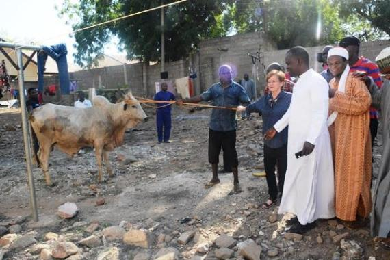 Atiku Abubakar Donates Birthday Gift Of 3 Cows & 5 Bags Of