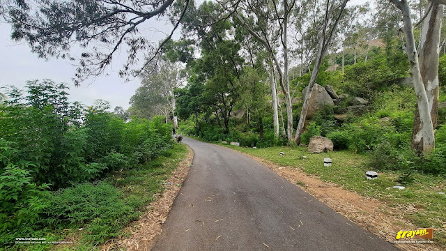 The narrow road leading to Devarayanadurga, uphill from Namada Chilume
