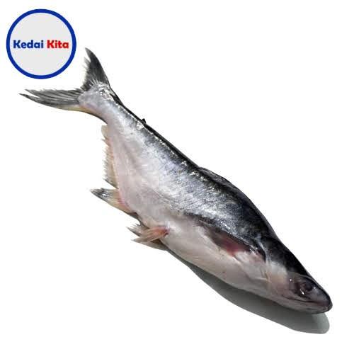 Ikan Patin 500 Gram