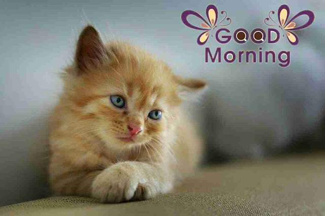Awesome good morning image of cute cat