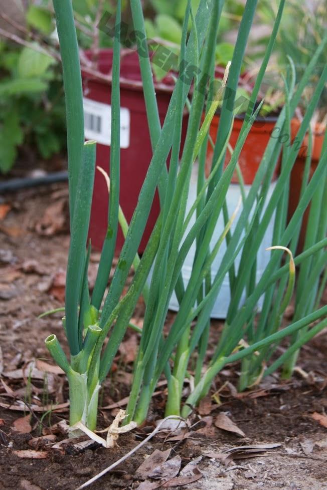 organic+gardening