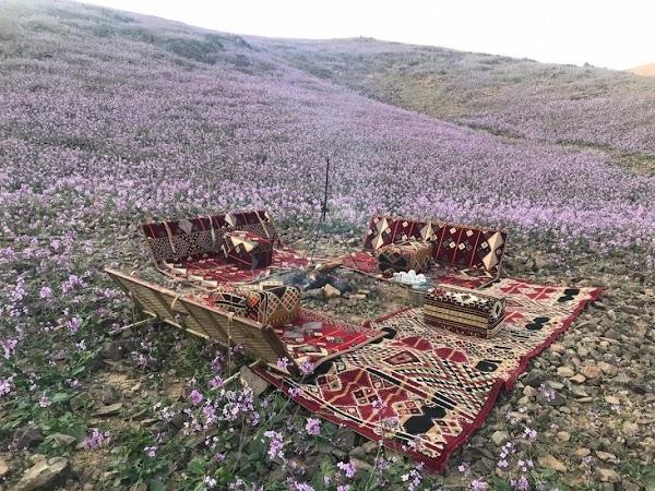 FOTOS: el desierto ha quedado de color púrpura.