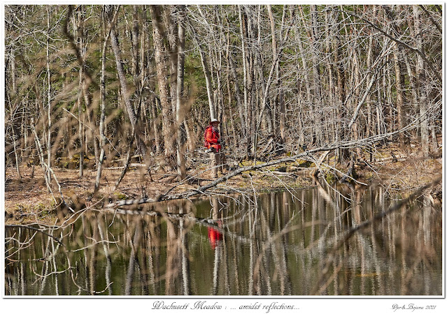 Wachusett Meadow: ... amidst reflections...
