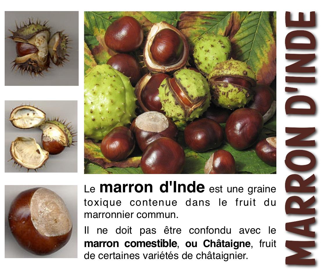 Amap 09 Montgailhard, les paniers du Pic •: Châtaigne ou..