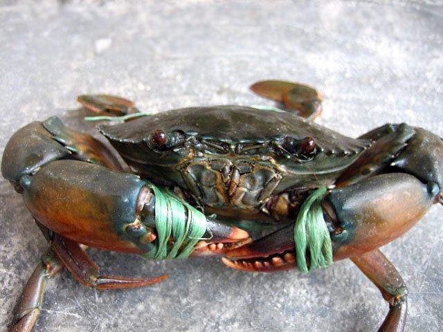 Cách ăn cua biển không bị đau bụng