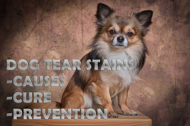 Dog tear stains
