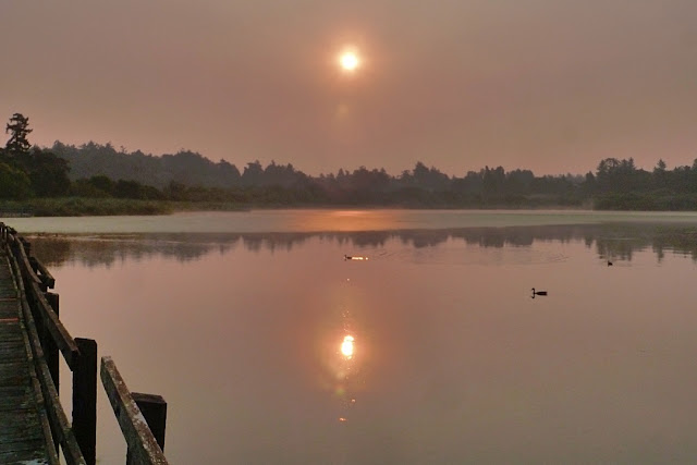 A dim sun rises over Swan Lake in Saanich, BC...
