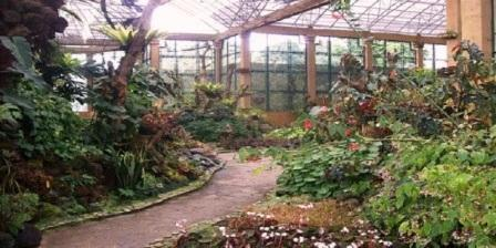 Wisata Taman Begonia wisata taman begonia lembang