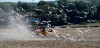 Seagulls fly around a tractor driven by a farmer who works his field in Wissant, France, August 9, 2017. (Credit: Reuters/Pascal Rossignol) Click to Enlarge.