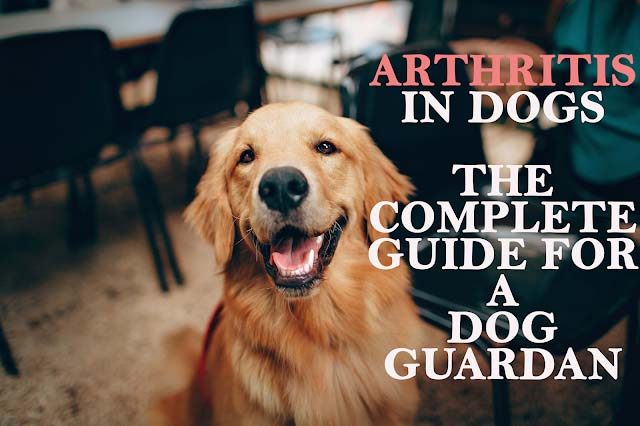 Arthritis in dogs: The DO's and DON'Ts for a dog guardian