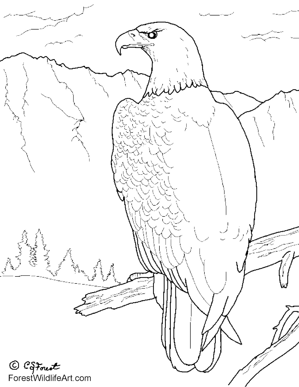 forest animals coloring pages