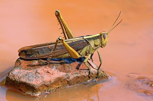 Locust - Load Testing in Python