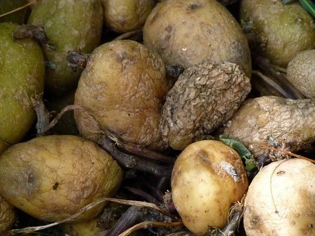 alteraciones en alimentos, seguridad alimentaria, hongos, mohos, bacterias, patógenos, microbios, alimentos, seguridad alimentaria, salud, alimentación