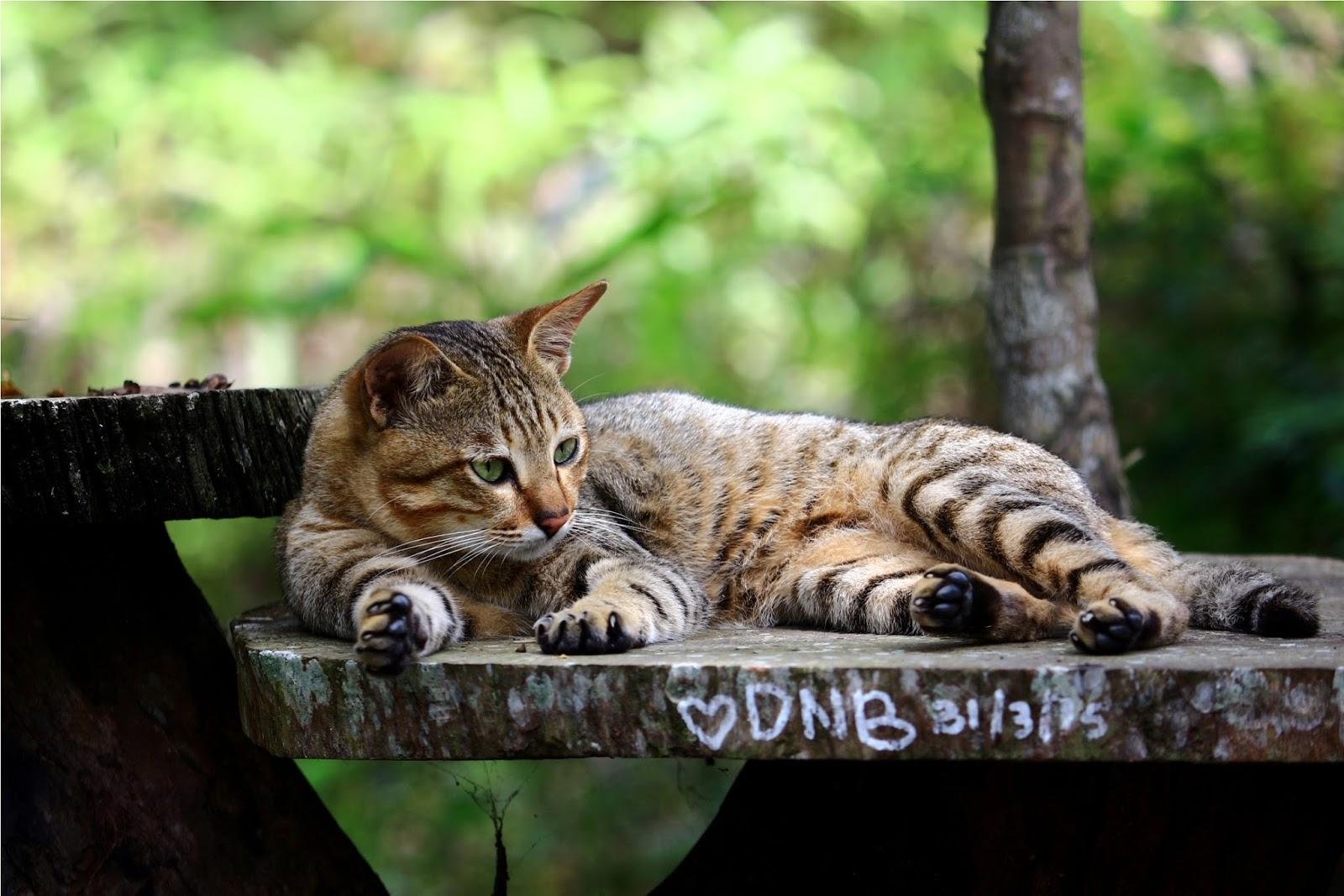 Kucing yang menemani jagawana di area pembibitan