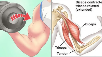 3 Reasons Why You Aren't gaining Biceps Fast