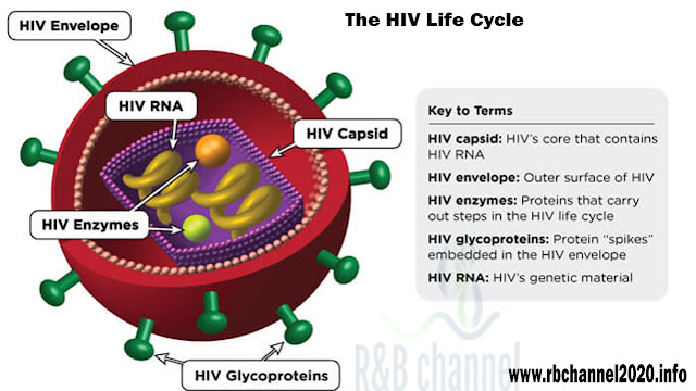 The HIV Life Cycle - R&B channel