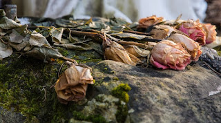 gambar bunga mawar indah 43