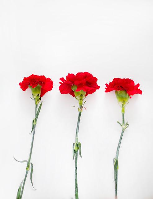 خلفيات جوال ورود حمراء جميلة