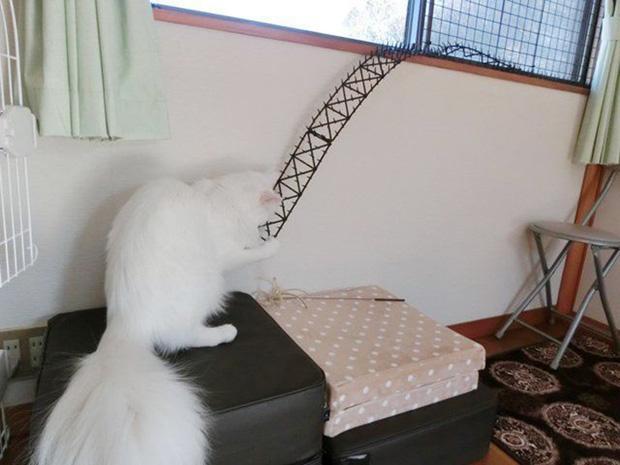 """Người Nhật mua bẫy gai để ngăn mèo chạy nhảy lung tung, kết quả khiến ai cũng """"dở khóc dở cười"""""""