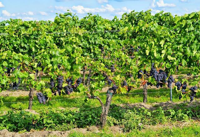 La Conselleria de Agricultura, Medio Ambiente, Cambio Climático y Desarrollo Rural tiene previsto destinar un total de 250.000 euros para la concesión de subvenciones destinadas a programas y proyectos educativos y de formación y divulgación de estrategias de dinamización agroecológicas en la Comunitat Valenciana.