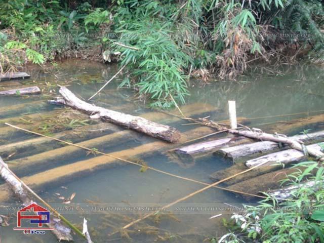 Cách xử lý gỗ tự nhiên tránh mối mọt tấn công