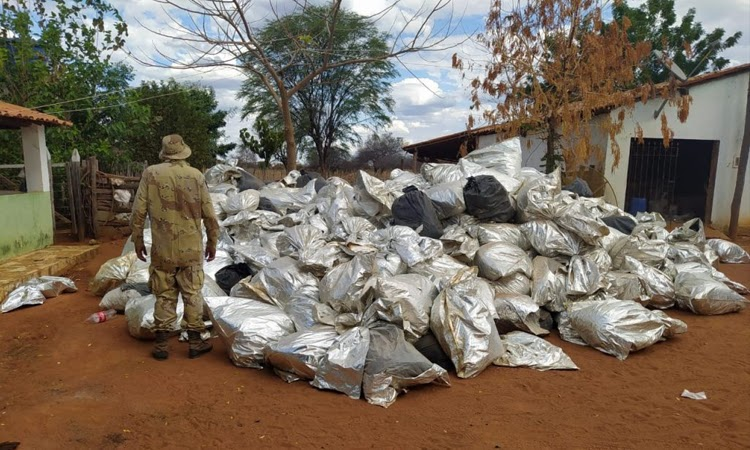 Atuação da PM contra criminalidade resulta em apreensão histórica de droga no Oeste da Bahia