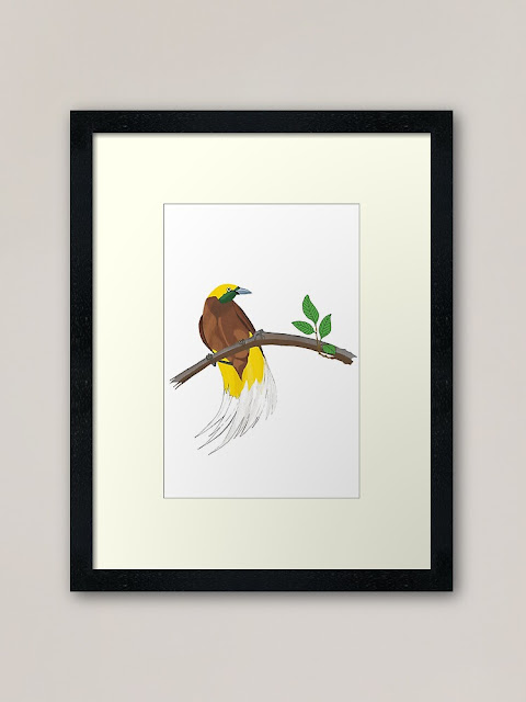 framed art print of Lesser Birds of Paradise (Paradisaea minor)