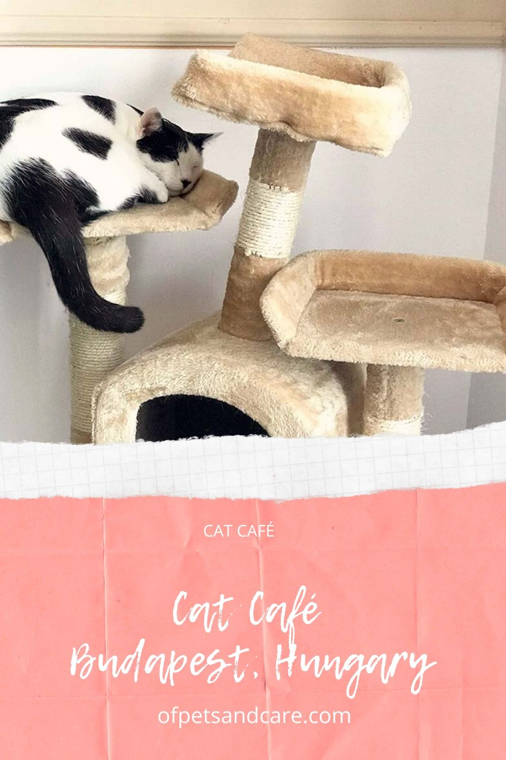 Cat Café & Gallery in Budapest, Hungary.