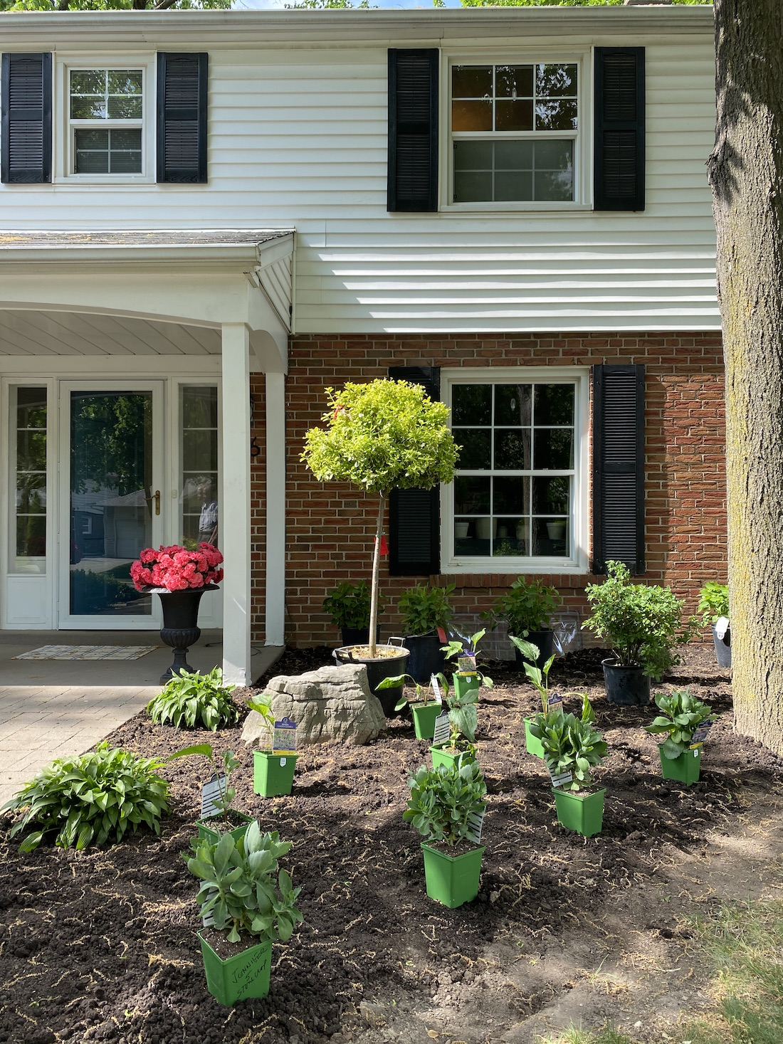 front garden plants stonecrop hydrangea coneflower euonymus standard azalea