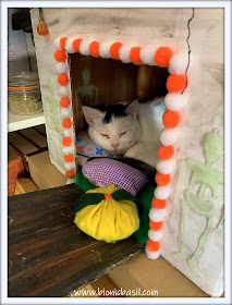 Halloween in July with Smooch ©BionicBasil® The Pet Parade 363