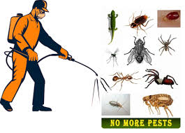 رش مبيدات , مكافحة حشرات , مكافحة الصراصير بحائل , مكافحة النمل الابيض بحائل , مكافحة الفئران بحائل , مكافحة الحمام بحائل , رش دفان بحائل , تركيب طارد حمام بحائل , رش الناموس والذباب بحائل , مكافحة العته بحائل , افضل شركة رش مبيد بحائل , شركة مكافحة الحشرات بحائل , رش الحشرات في حائل , شركة رش صراصير بحائل , مكافحة الحشرات في حائل , شركة مكافحة البق بحائل , شركة رش العثة بحائل , ارخص شركة رش مبيد بحائل , مكافحة الكلاب بحائل , مكافحة الثعابين بحائل , مكافحة الوزغ بحائل , مكافحة الناموس والذباب , رش الناموس , رش الذباب , ابادة الحشرات الطائرة ,ابادة الحشرات الزاحفة , شركة مكافحة حشرات بحائل , شركة متخصصة في مكافحة الحشرات , شركة مكافحة بق الفراش , شركة رش حشرات , افضل شركة مكافحة حشرات , شركة رش صراصير , شركة رش صراصير بحائل  , مكافحة الصراصير