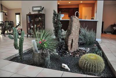pohon kaktus di tanam di dalam rumah