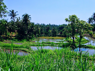 Terrace Farming Landscape At Ringdikit Village North Bali Indonesia