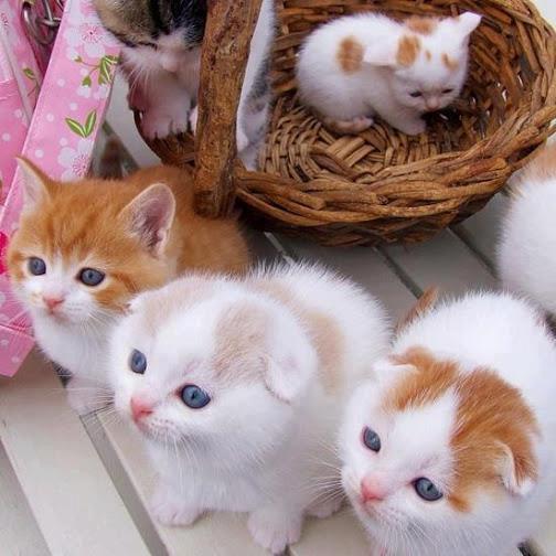 5 Gatitos canasta regalo