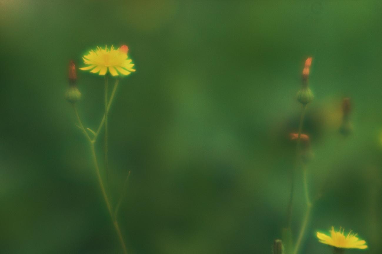 Das 15-Minuten-Selbstbauobjektiv — Glühendes Blümlein