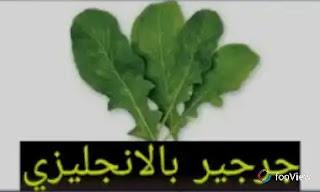 ترجمة جرجير بالانجليزي