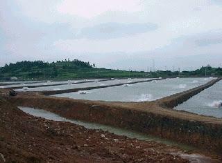 Prawn embankments belong to the agrarian companies