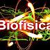 O que mais te chamou atenção na área da biofísica?