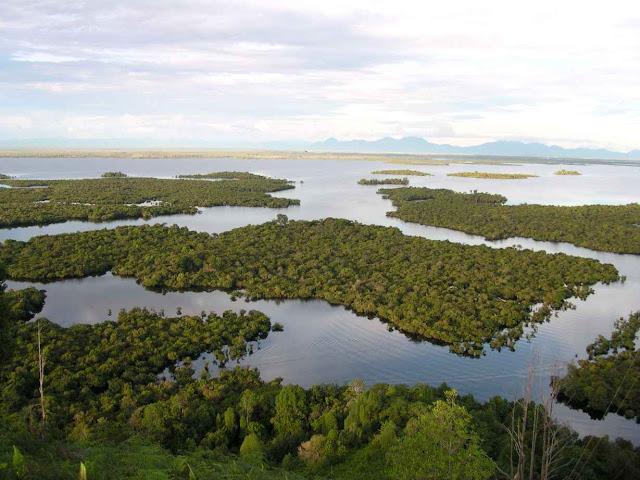 wisata kalimantan barat danau sentarum