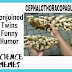 Cephalothoracopagus, Conjoined Twins Jokes ,a newborn disorder in humorous way. Funny memes.