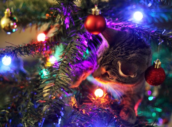 Cat Image Christmas tree