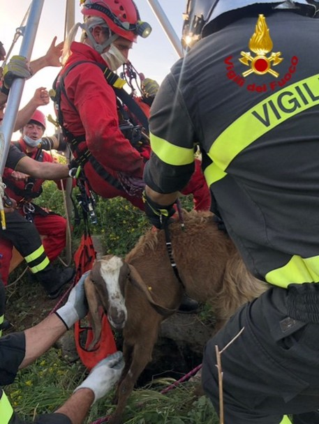 Lecce: capra cade in pozzo profondo 26 metri, salva grazie ai Vigili del Fuoco (VIDEO)