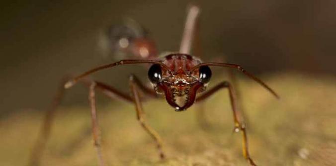 Dedetizadora de formigas São Lucas Sp