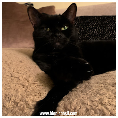 Black Cat Appreciation Day 2020 with Parsley Sauce ©BionicBasil® Snuggly Cat