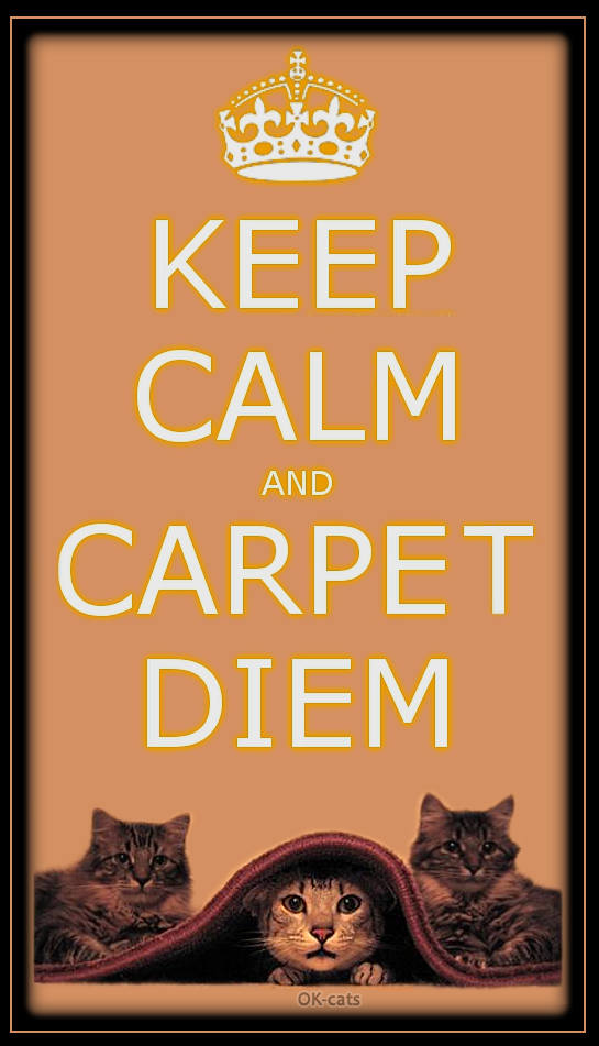 Photoshopped Cat Picture • Keep calm and Carpet diem, haha funny cat