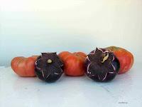 Μελιτζάνα σπορά φύτεμα καλλιέργεια-Round Mauve